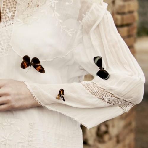 Polvo de mariposas
